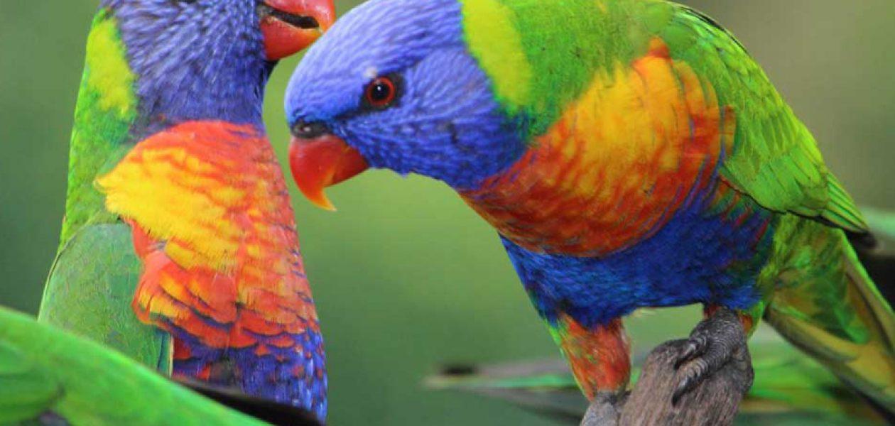 El secreto de las aves